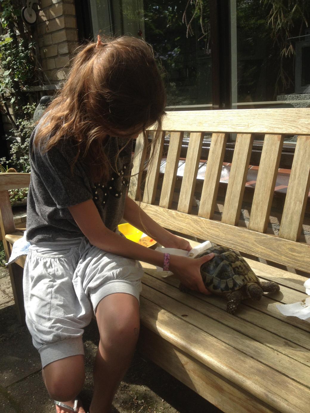 Van Nellie's Tuinbank: Griekse landschildpadden | De Bastei