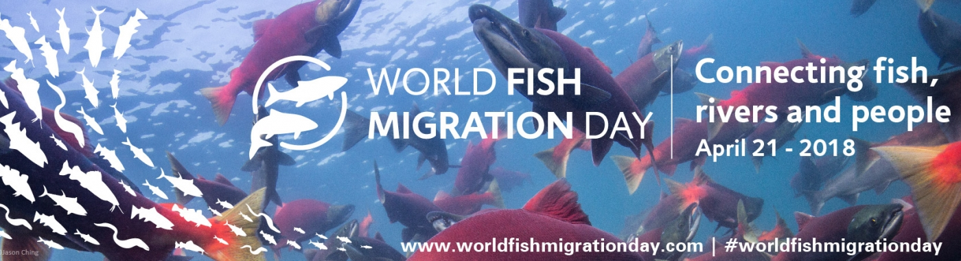 Web banner World Fish Migration Day 21 april 2018